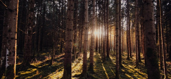 """The morning woods or forest that is the setting for the Campfire Horror Stories short story """"Change"""""""